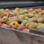 Gruppenlogo von Spendet eure Äpfel!
